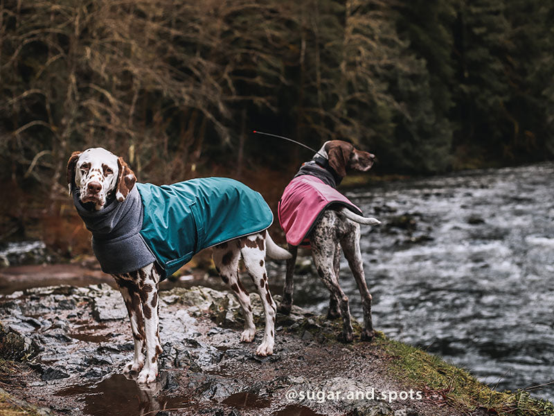 Voyagers K9 Apparel Dalmatian and German Shorthaired Pointer Winter Coats