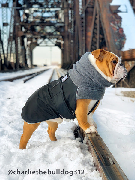 Voyagers K9 Apparel English Bulldog Winter Coat