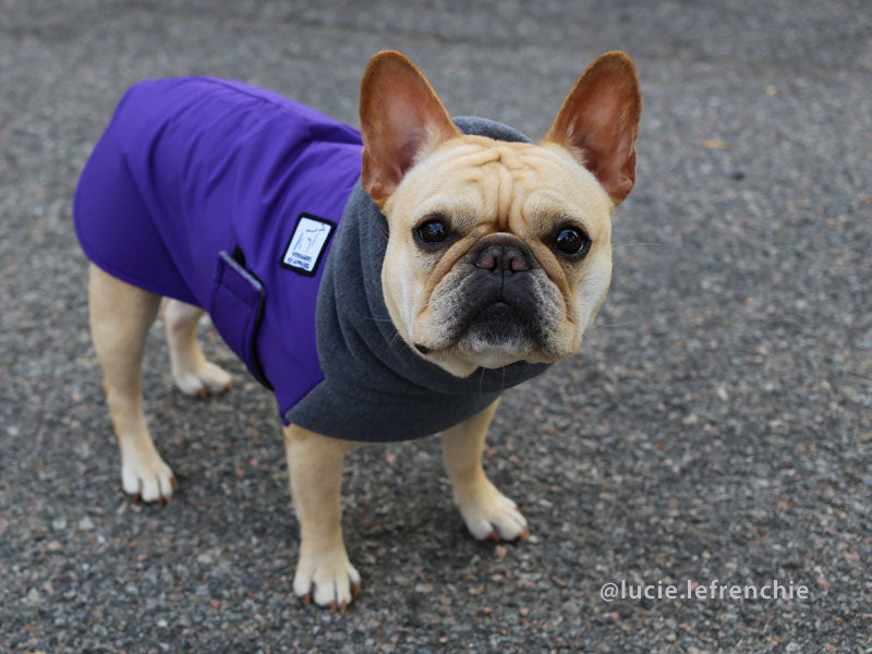 Voyagers K9 Apparel French Bulldog Winter Coat