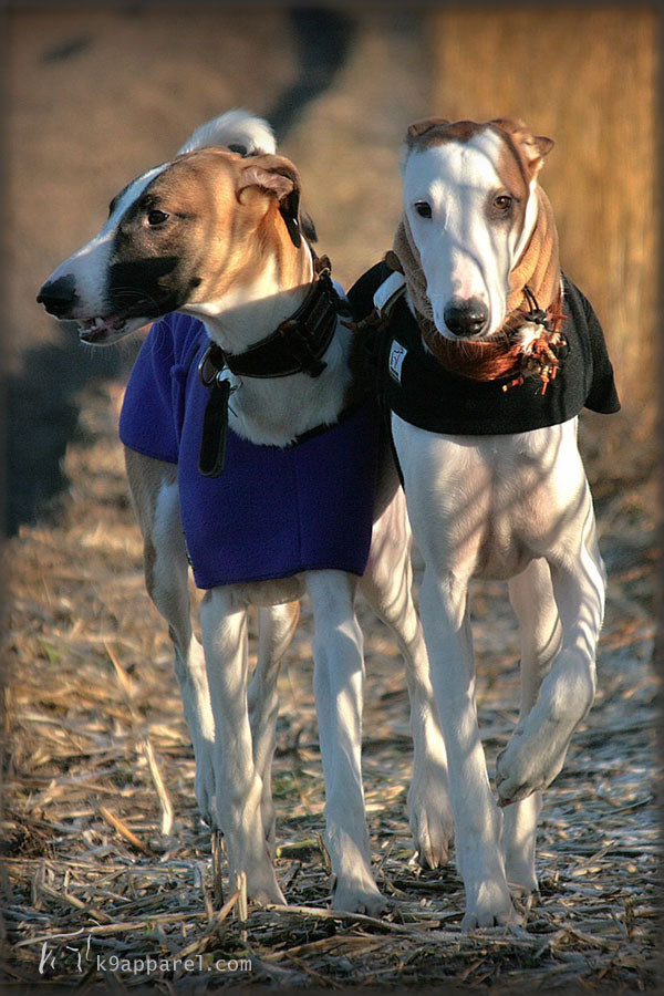 Voyagers K9 Apparel Greyhound Dog Spring Fall Coat and Dog Tummy Warmer Sweater Vest