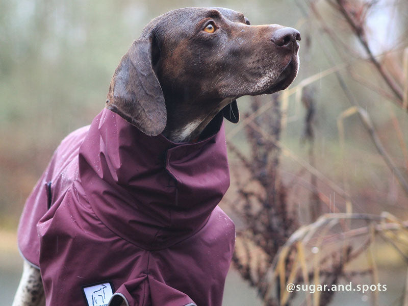 Voyagers K9 Apparel German Shorthaired Pointer Rain Coat
