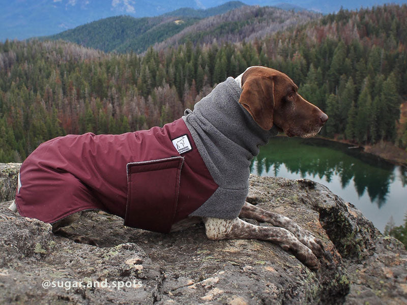 Voyagers K9 Apparel German Shorthaired Pointer Winter Coat