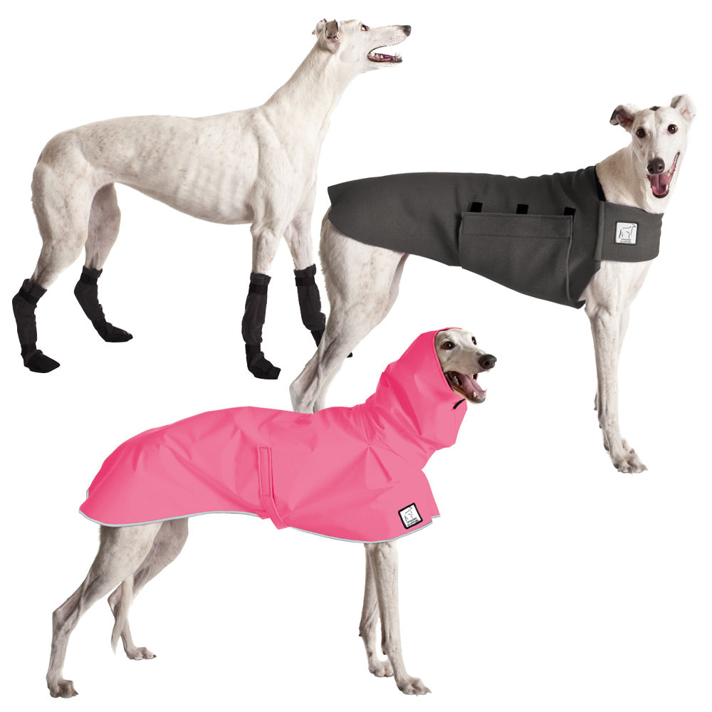 Voyagers K9 Apparel Greyhound Moderate Climate Combo