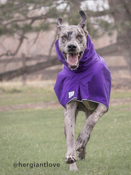 Voyagers K9 Apparel Great Dane Rain Coat