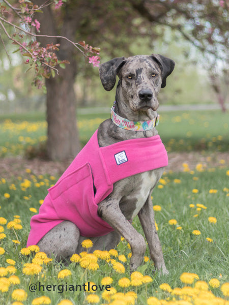 Voyagers K9 Apparel Great Dane Tummy Warmer