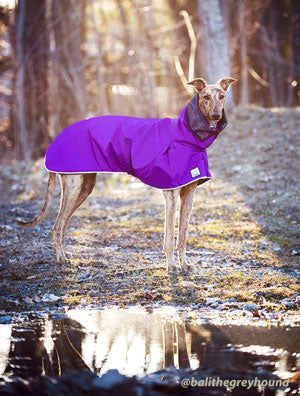 Voyagers K9 Apparel Greyhound Rain Coat