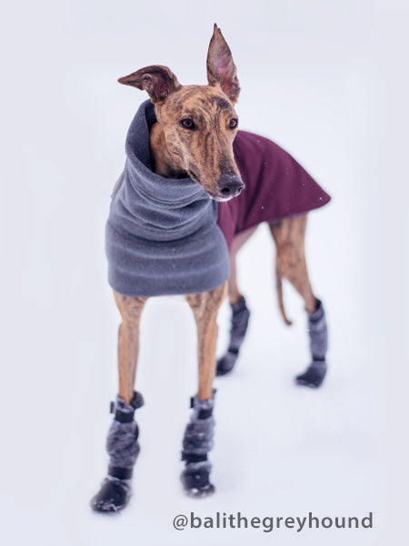 Voyagers K9 Apparel Greyhound Winter Coat and Dog Booties