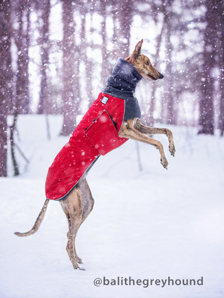 Voyagers K9 Apparel Greyhound Winter Coat
