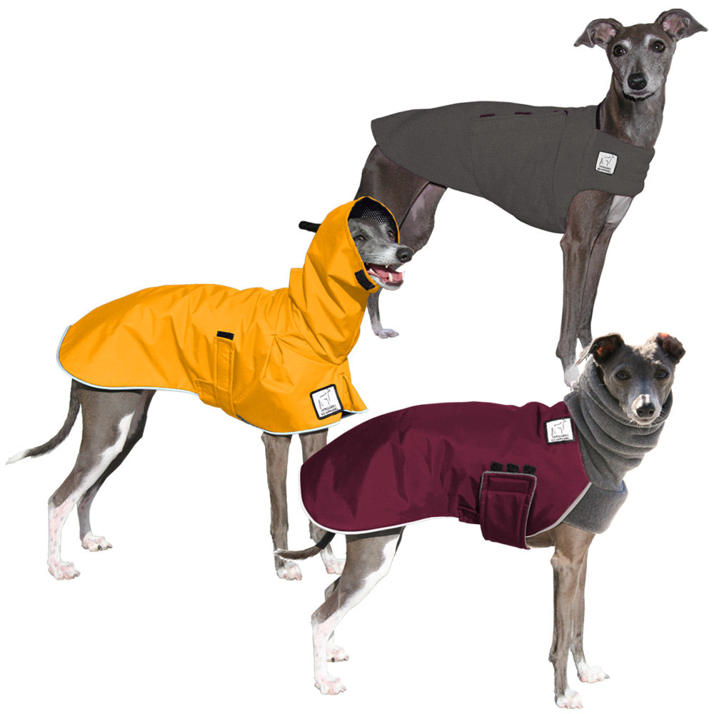 Voyagers K9 Apparel Italian Greyhound All Weather Combo