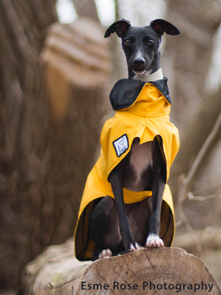 Voyagers K9 Apparel Italian Greyhound Rain Coat