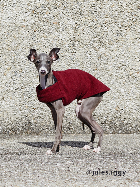 Voyagers K9 Apparel Italian Greyhound Tummy Warmer
