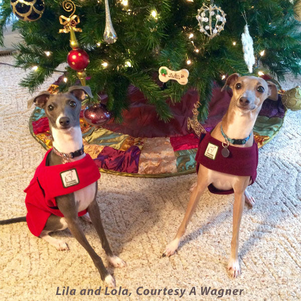 Voyagers K9 Apparel Italian Greyhound Tummy Warmers