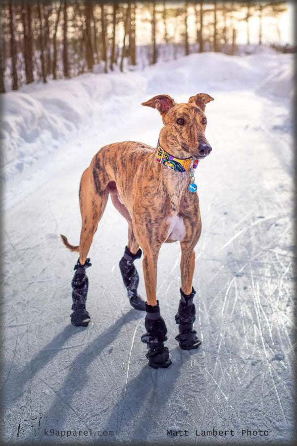 Voyagers K9 Apparel Greyhound Dog Booties