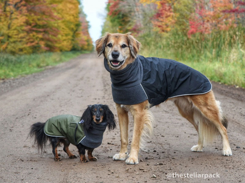 Voyagers K9 Apparel Miniature Dachshund and Custom Dog Winter Coats
