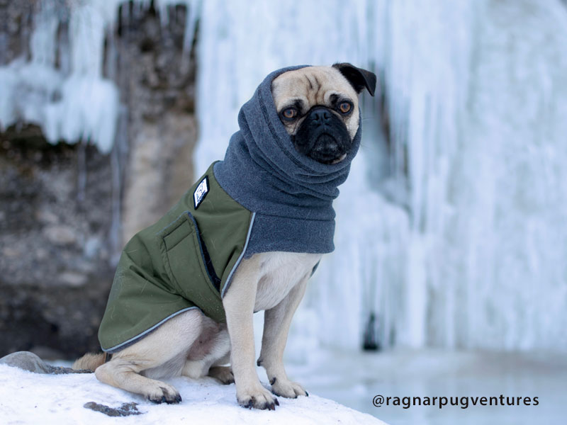 Voyagers K9 Apparel Pug Winter Coat