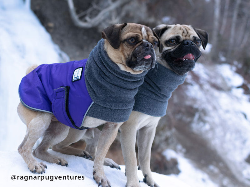Voyagers K9 Apparel Pug Winter Coats