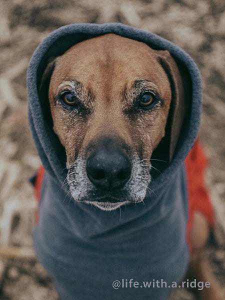 Voyagers K9 Apparel Rhodesian Ridgeback Winter Coat