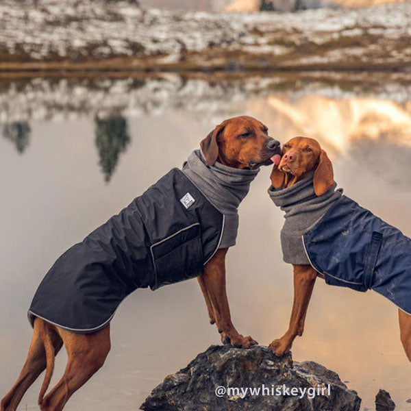 Voyagers K9 Apparel Rhodesian Ridgeback and Vizsla Winter Coats