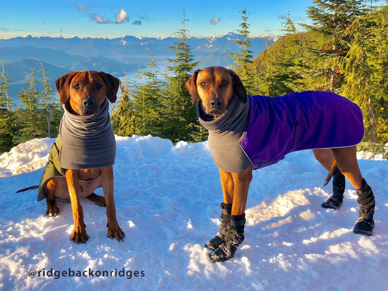 Voyagers K9 Apparel Rhodesian Ridgeback Winter Coat and Dog Booties
