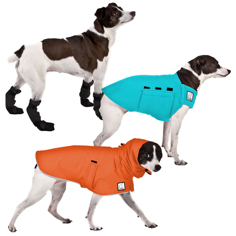 Voyagers K9 Apparel Rat Terrier Moderate Climate Combo
