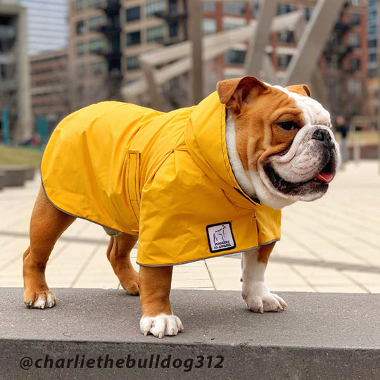 Select quality gear. Voyagers K9 Apparel English Bulldog Rain Coat @charliethebulldog312