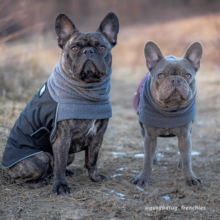 Voyagers K9 Apparel Breed-Specific and Custom-Sized Dog