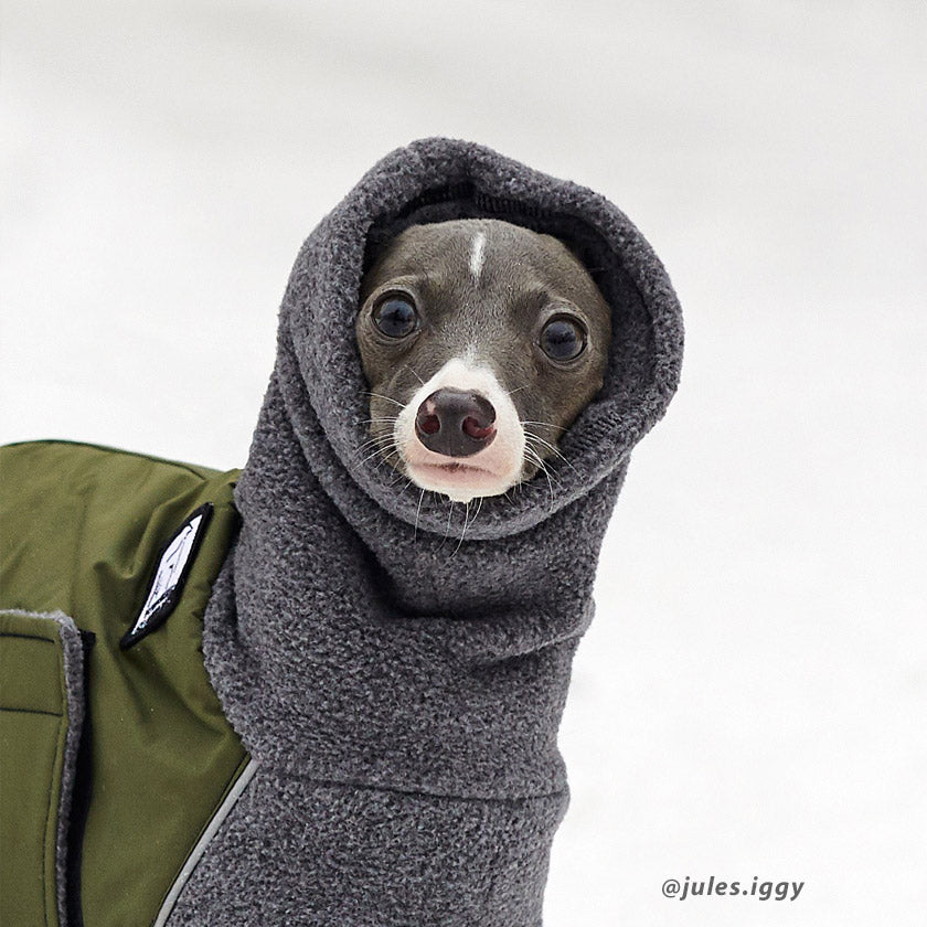 Voyagers K9 Apparel Winter Coat keeps Italian Greyhound snug and warm all winter. (@jules.iggy)