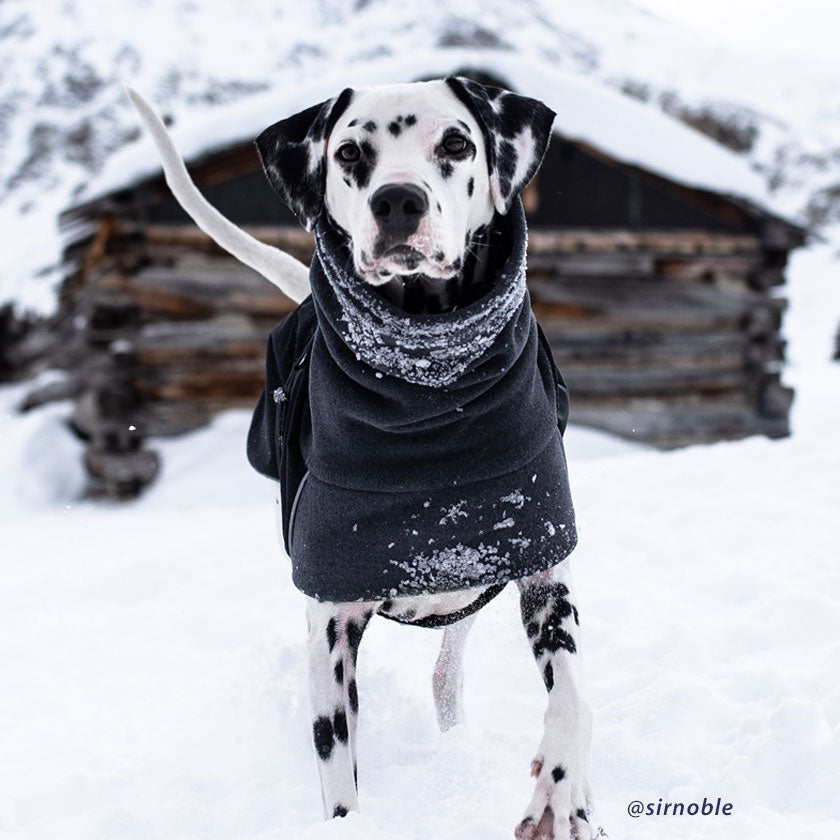 Voyagers K9 Apparel winter coats keep dogs warm and comfortable on cold, snowy adventures.