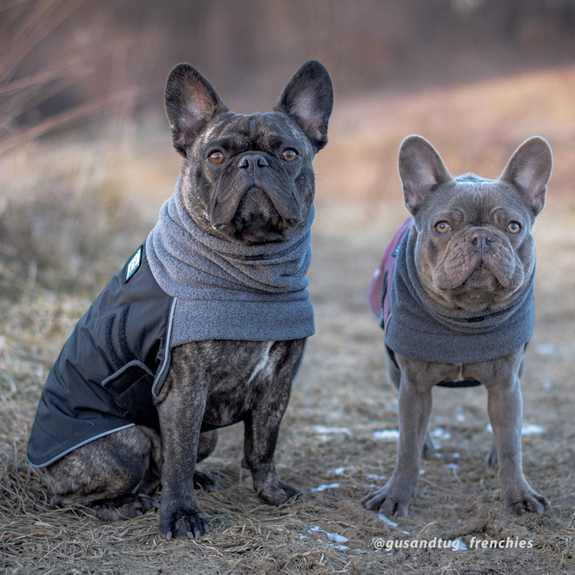Select the best gear for your dogs this season with warm winter coats from Voyagers K9 Apparel.