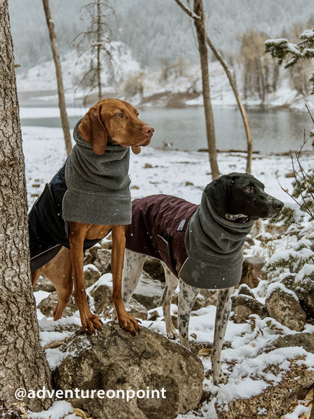 Voyagers K9 Apparel Vizsla and German Shorthaired Pointer Winter Coats