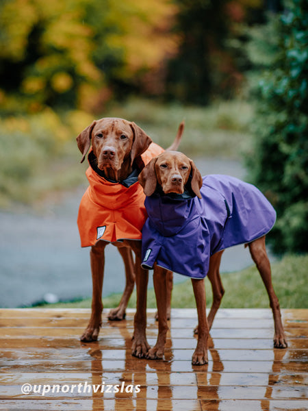 Voyagers K9 Apparel Vizsla Rains Coats