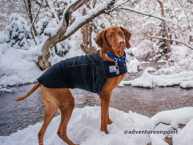 Voyagers K9 Apparel Vizsla Tummy Warmer