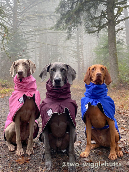 Voyagers K9 Apparel Vizsla and Weimaraner Rain Coats