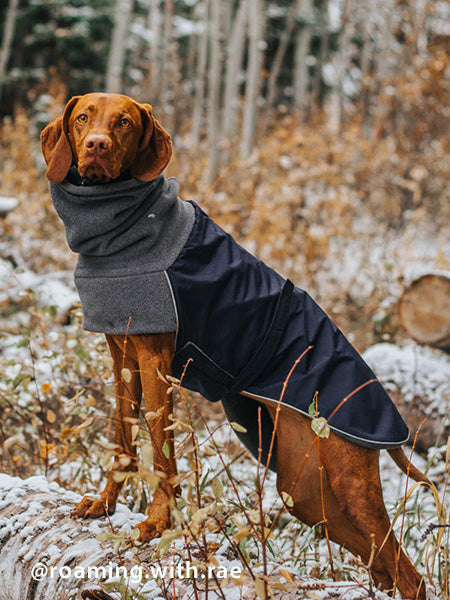 Voyagers K9 Apparel Vizsla Winter Coat