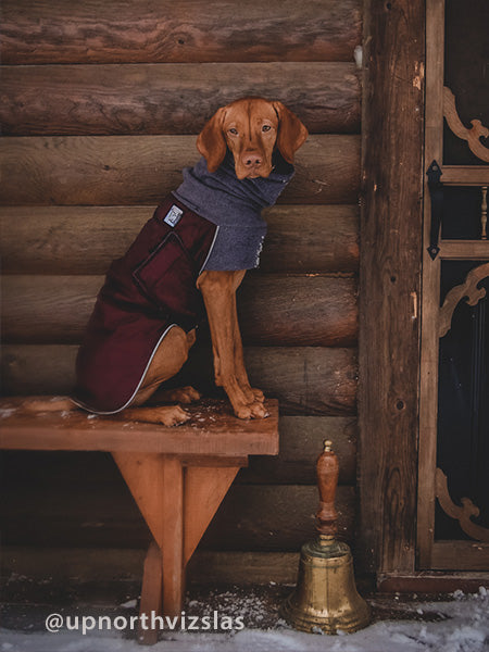 Voyagers K9 Apparel Vizsla Wineter Coat