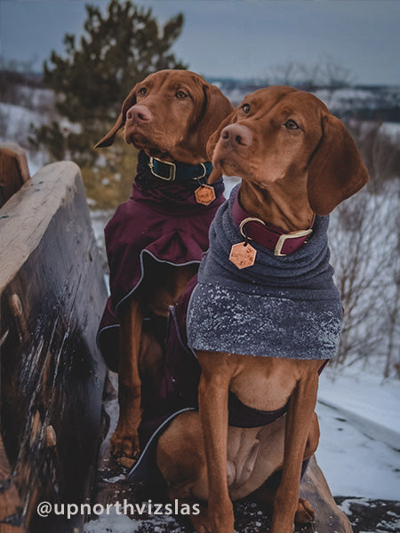 Voyagers K9 Apparel Vizsla Winter Coats