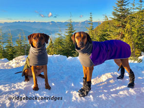 Voyagers K9 Apparel Dog Winter Coats and Booties