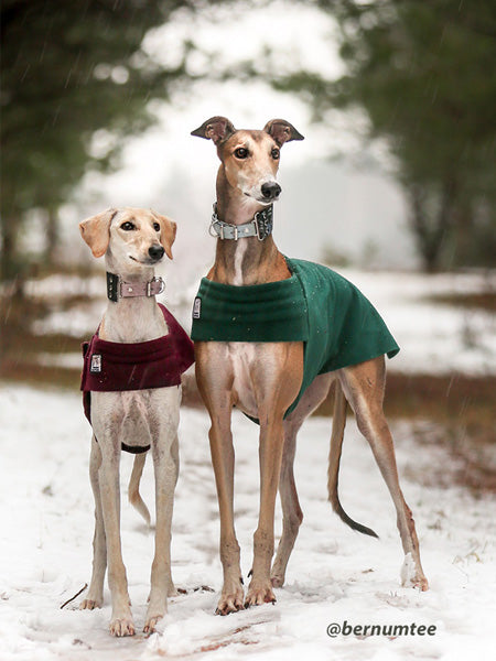 Voyagers K9 Apparel Whippet Tummy Warmer