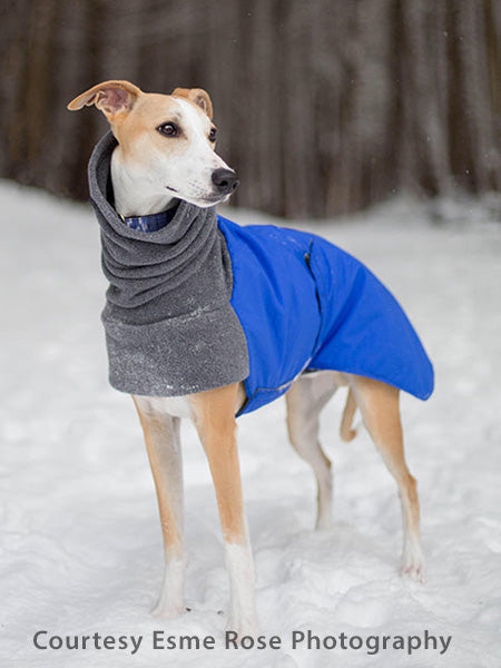 Voyagers K9 Apparel Whippet Winter Coat