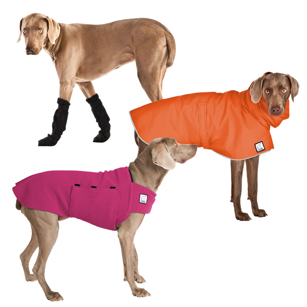 Voyagers K9 Apparel Weimaraner Moderate Climate Combo