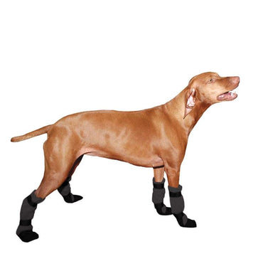 Vizsla Dog Booties - Voyagers K9 Apparel