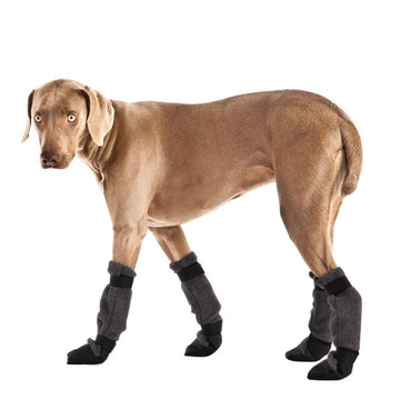Weimaraner Dog Booties - Voyagers K9 Apparel
