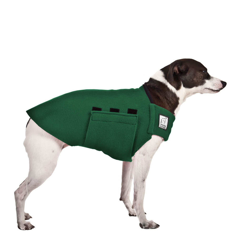 Rat Terrier Tummy Warmer - Voyagers K9 Apparel