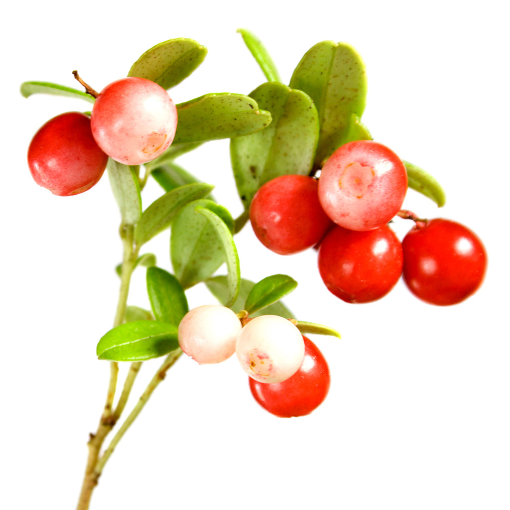 Amoretti Lingonberry Extract Oil Soluble