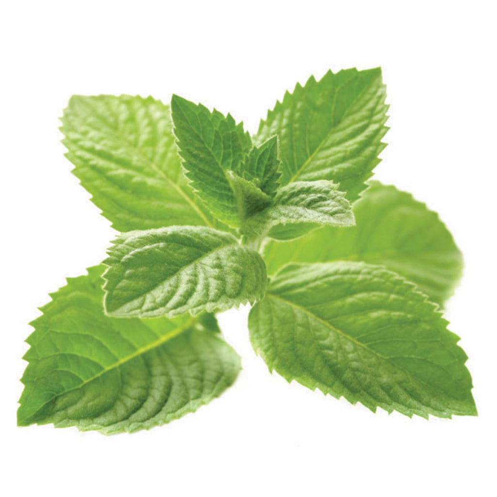 Mojito Mint Liqueur Concentrate (just mint, no lime)