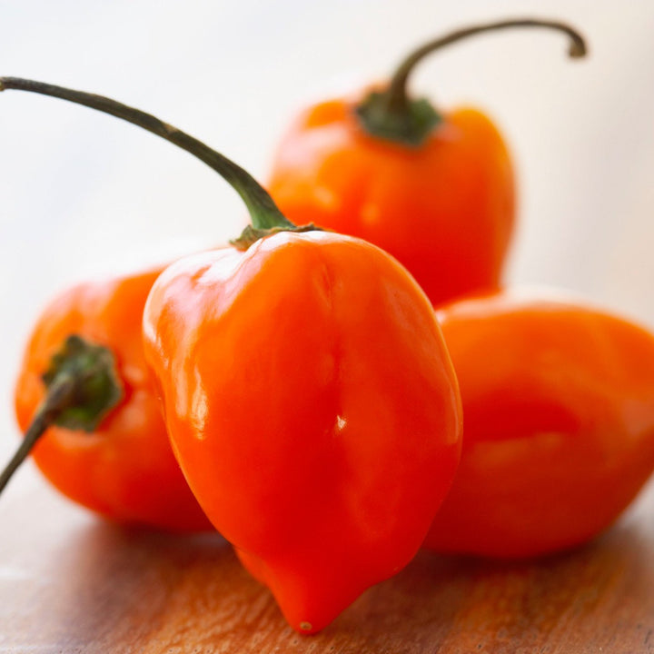 Amoretti Natural Habanero Hot Pepper Extract O.S.