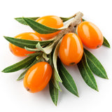 Natural Sea Buckthorn Extract Water Soluble