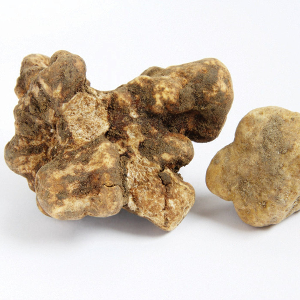 Amoretti White Truffle Extract W.S.