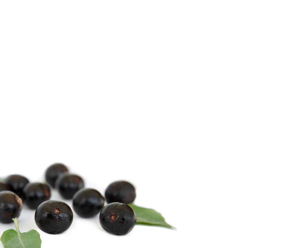 What is Açaí?