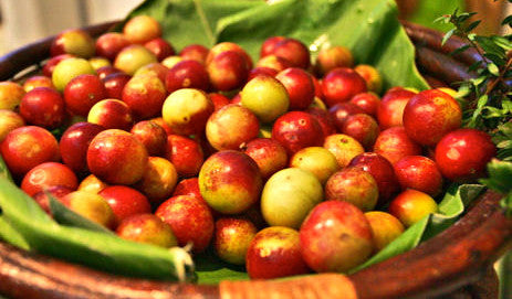 Superfood 101: Camu Camu